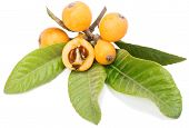 foto of loquat  - Loquat fruits on a branch with leaves and seeds isolated on a white background - JPG