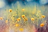 picture of yellow buds  - Beautiful nature - JPG