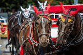 image of carriage horse  - Horse Carriage waiting for tourists at the Old Square in Prague - JPG