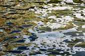 picture of scum  - Scum bubbles floating on polluted water surface - JPG
