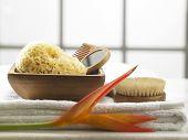 pic of bath sponge  - natural sponge in the bath room - JPG