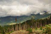 stock photo of deforestation  - Alpine Deforestation - JPG