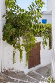 picture of tourist-spot  - Potted Plants in the Street of Hora Sfakion on Crete - JPG