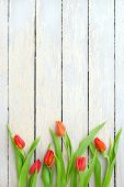 ������, ������: Red Tulips