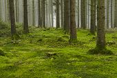 picture of floor covering  - A forest with trees stubs and a moss - JPG