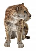 stock photo of saber  - 3D digital render of a smilodon or a saber toothed cat isolated on white background - JPG