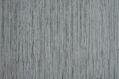 stock photo of ash-tree  - white ash - JPG