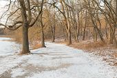 stock photo of pedestrians  - A pedestrian path in the winter with snow on the ground and trees without leaves - JPG