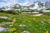 picture of snowy hill  - Trail through the alpine meadow with wild flowers in Snowy Range Mountains of Medicine Bow Wyoming in summer - JPG