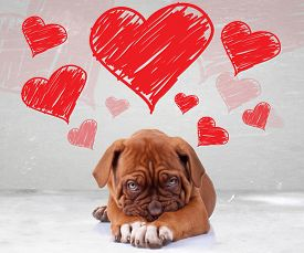 stock photo of bordeaux  - shy love of a dog de bordeaux puppy wit adorable face on hearts background - JPG