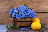 stock photo of blue-bell  - Blue bell flowers with lemon on wooden background - JPG