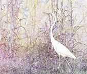 stock photo of tall grass  - A stylized photograph of a Great White Heron walking through tall grasses - JPG