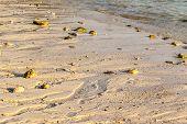pic of shoreline  - close up of the shoreline on a tropical thai beach - JPG