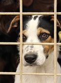 stock photo of sad dog  - the potrait of a sad looking dog in an iron cage - JPG