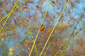 stock photo of ladybug  - the summer meadow and ladybug on a grass - JPG