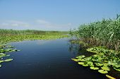 foto of vegetation  - Water channel in the Danube delta with swamp vegetation