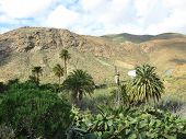 pic of water-mill  - Agriculture with an American water wind mill in the green valley of Vega de Rio Palmas on the Canary Island Fuerteventura - JPG