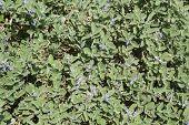 foto of violet flower  - Violet flowers blossom and foliage background - JPG