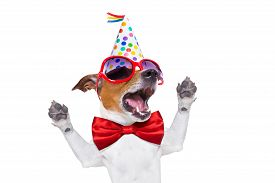 stock photo of birthday hat  - jack russell dog as a surprise singing birthday song wearing red tie and party hat isolated on white background - JPG