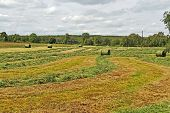 stock photo of crips  - The harvest time grass baled for hay - JPG