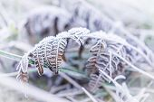 Macro Closeup Of Frost Ice Crystals On Orange Autumn Leaves, Grass In Morning On Ground poster