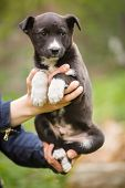 Homeless Dog Looking For A Home. The Problem Of Homeless Animals. Puppy On The Hands Of A Veterinari poster