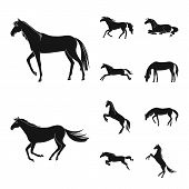 Vector Illustration Of Fauna And Mare Icon. Set Of Fauna And Stallion Stock Symbol For Web. poster