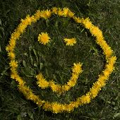 picture of smiley face  - A suggestive wink by a smiley face in yellow dandelions - JPG