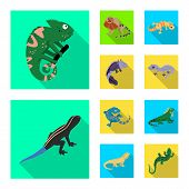 Vector Illustration Of Tail And Fauna Symbol. Set Of Tail And Environment Stock Symbol For Web. poster