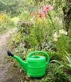 Green Watering can On A Background A Flowerbed
