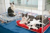 Exhibition Or Fair Cats. Cats In The Cage poster