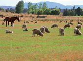 stock photo of farm animals  - animal farm - JPG