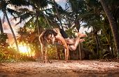 image of dreadlock  - Yoga handstand pose with legs in garudasana by fit man with dreadlocks on the beach near the fishermen hut in Varkala Kerala India - JPG
