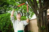stock photo of tree trim  - Professional gardener pruning a tree - JPG