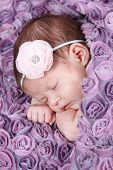 Beautiful Newborn baby girl sleeping in rose blanket