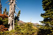 stock photo of olympic mountains  - Hurricane Ridge in the Olympic Peninsula - JPG