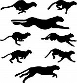 picture of tigress  - Set of different wildcats running silhouettes for design use - JPG