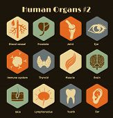 pic of internal organs  - Vector retro icons of human organs and systems Flat design - JPG