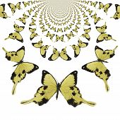picture of mustering  - Digital painted Illustration of Butterflies in kaleidoscopic Pattern - JPG