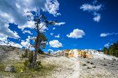 image of mammoth  - Mammoth Hot Springs Yin nature daytime Wyoming USA - JPG