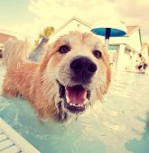 stock photo of mutts  -  a cute dog at a local public pool  - JPG