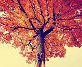 stock photo of tree leaves  -  feet resting on a tree trunk during fall when the leaves are turning colors toned with a retro vintage instagram filter  - JPG