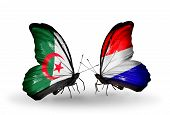 foto of holland flag  - Two butterflies with flags on wings as symbol of relations Algeria and Holland - JPG