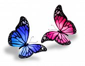 picture of butterfly  - Pink and blue butterfly isolated on white - JPG