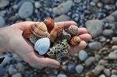 stock photo of pumice-stone  - Hand holding sea shells and pumice stones found washed on rocky beach - JPG