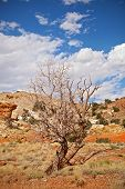 picture of southwest  - Tree in the red desert of Southwest USA Capitol Reef National Park in Utah on a beautiful summer day wiyh blue sky and clouds and colorful red rocks and sand of the desert - JPG