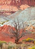 stock photo of southwest  - Tree in the red desert of Southwest USA Capitol Reef National Park in Utah with colorful red rocks and sand of the desert - JPG