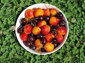 picture of bohemia  - bowl of fruit southern Bohemia Czech Republic - JPG