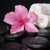 foto of hibiscus  - Beautiful spa still life of pink hibiscus drops and towels on zen stones with reflection water closeup - JPG