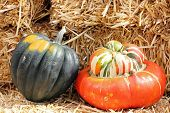 pic of turban  - Acorn and Turban squash with hay for Fall decoration - JPG